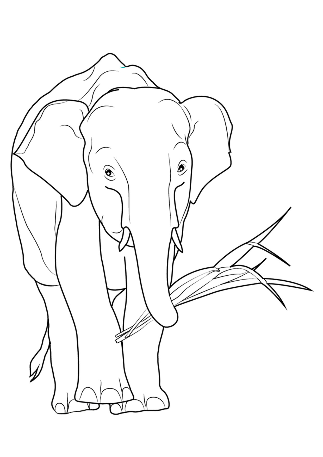 Disegno di elefanti da colorare 22