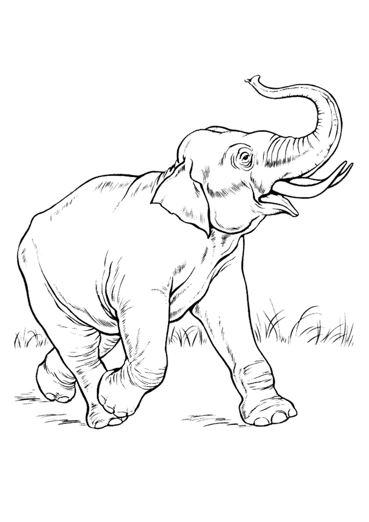Disegno di elefanti da colorare 24