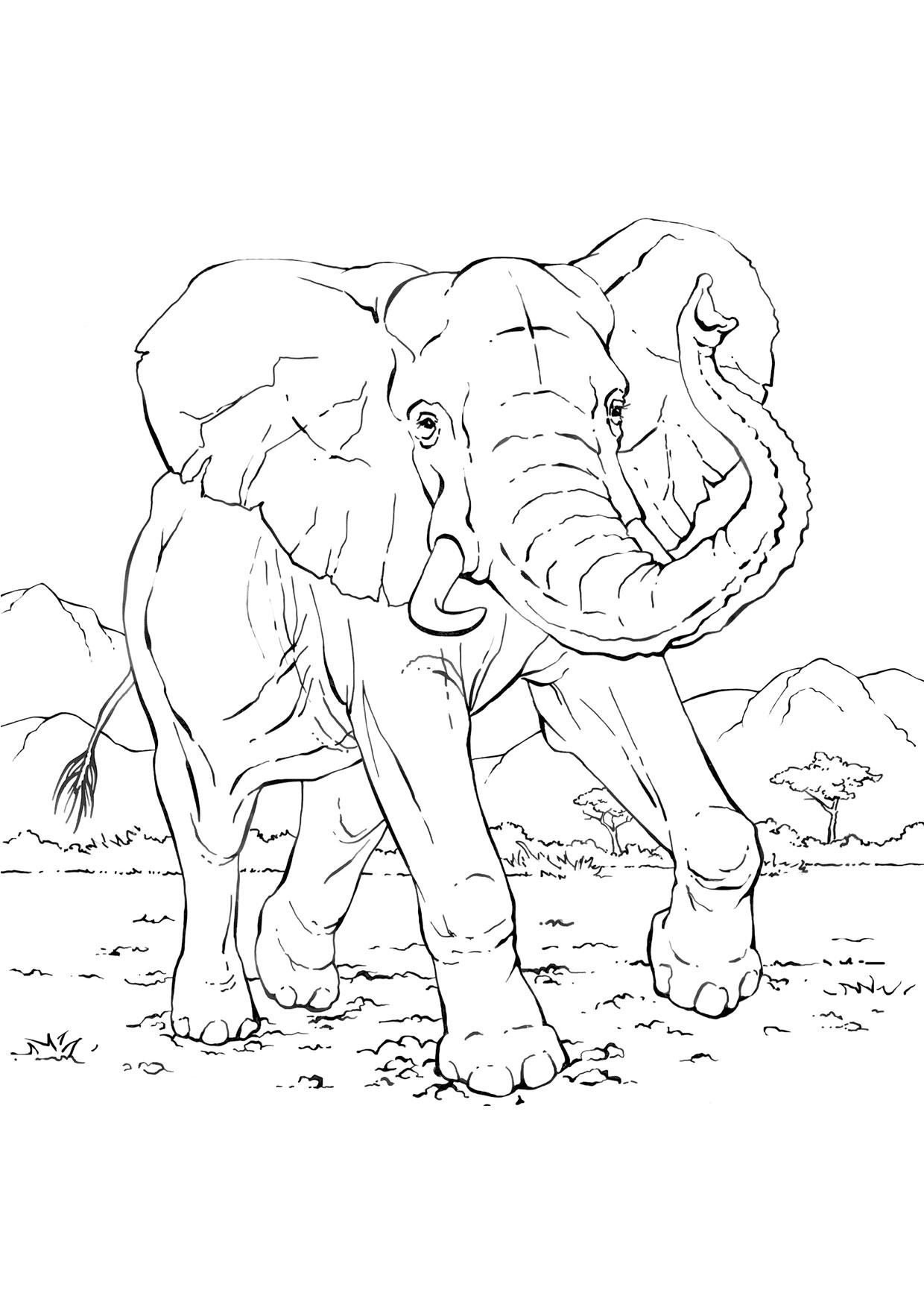 Disegno di elefanti da colorare 25