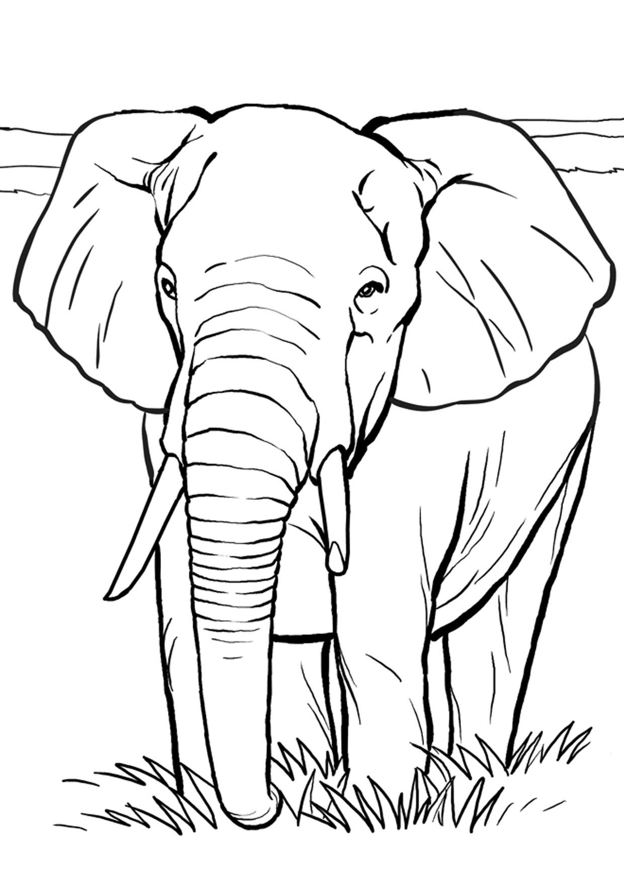Disegno di elefanti da colorare 27
