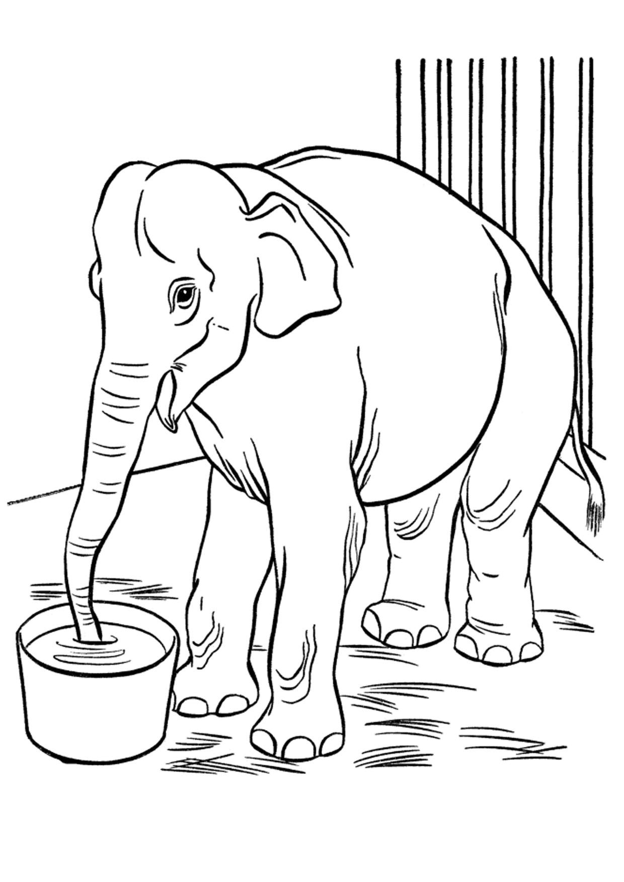 Disegno di elefanti da colorare 28