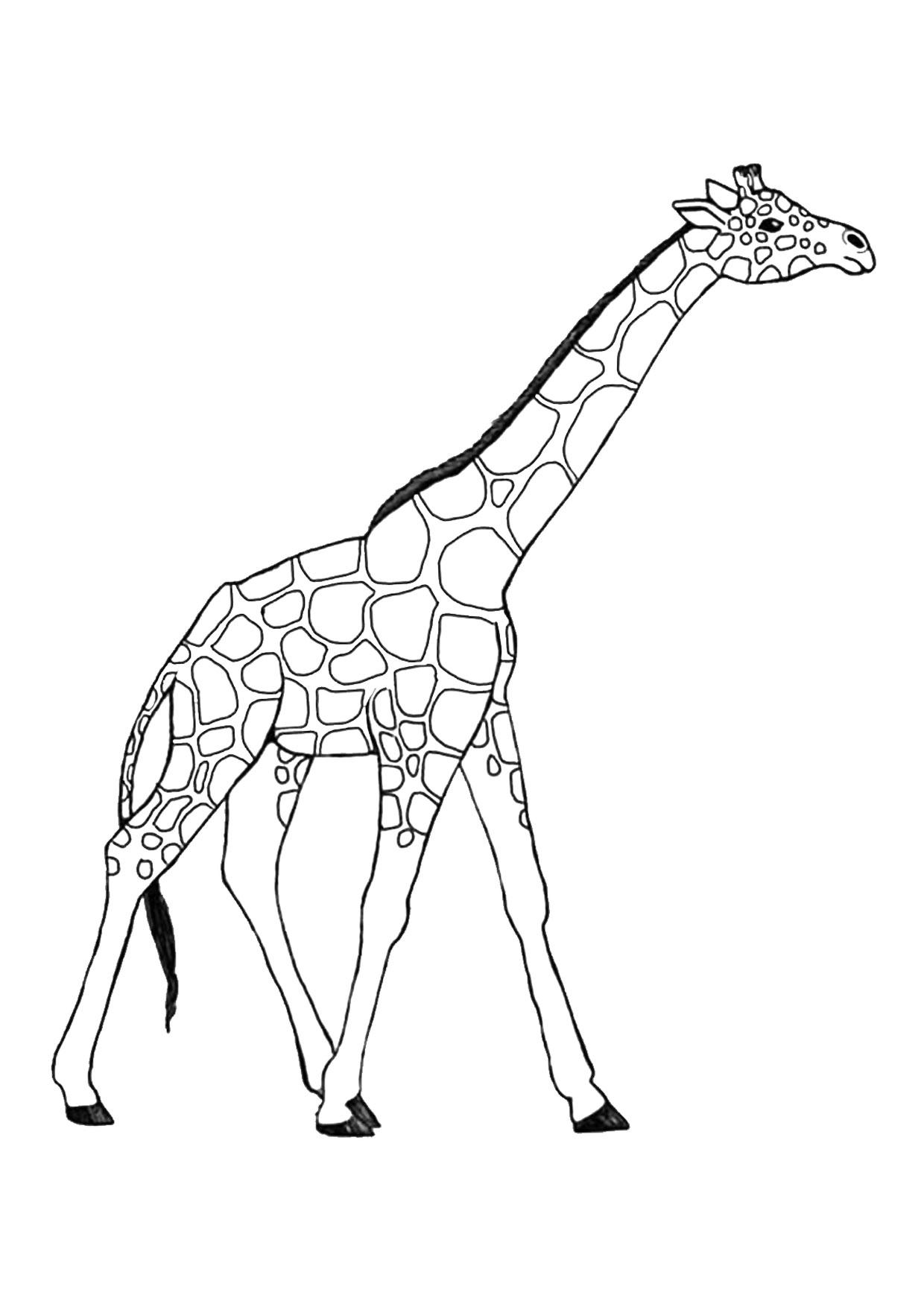 Disegno di giraffa 01