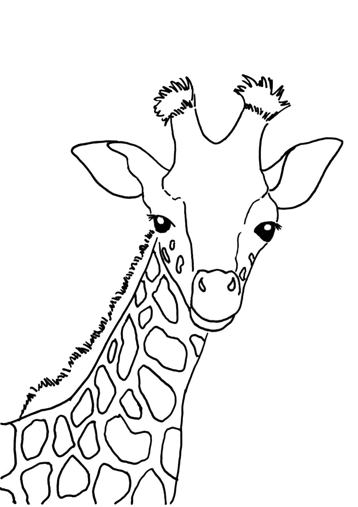 Disegno di giraffa 02