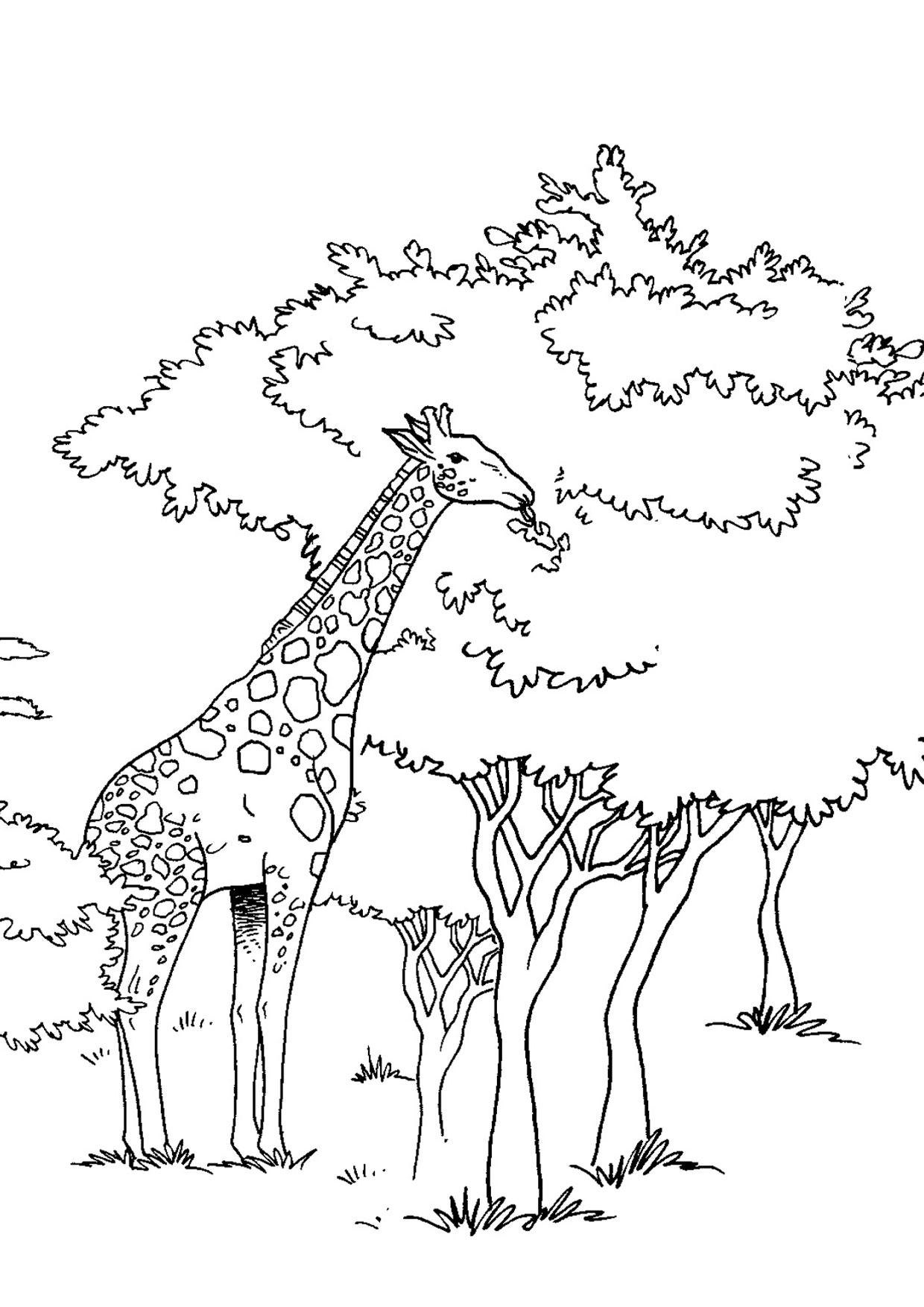 30 disegni di giraffe da colorare for Sito per disegnare