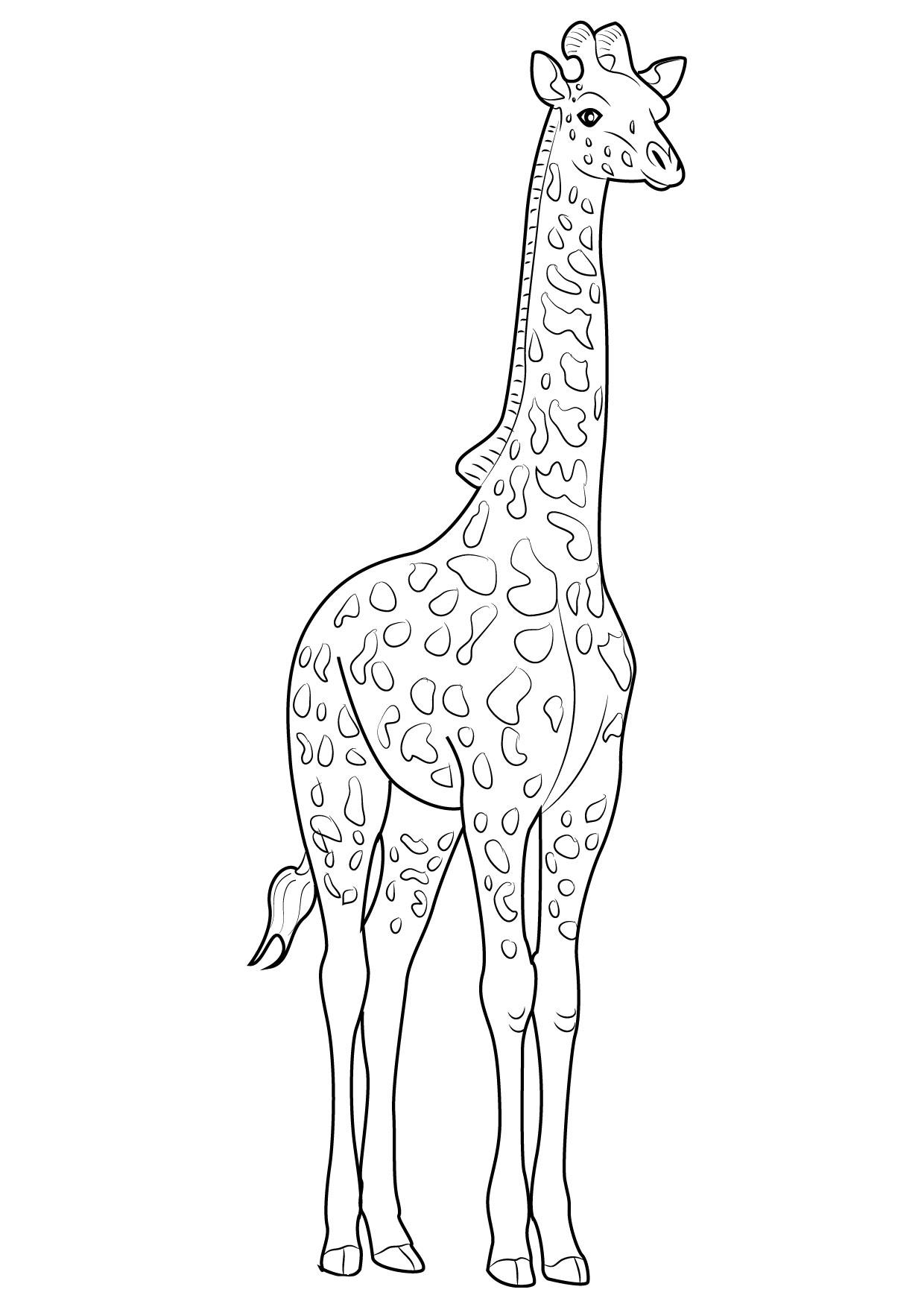 30 Disegni Di Giraffe Da Colorare Pianetabambiniit