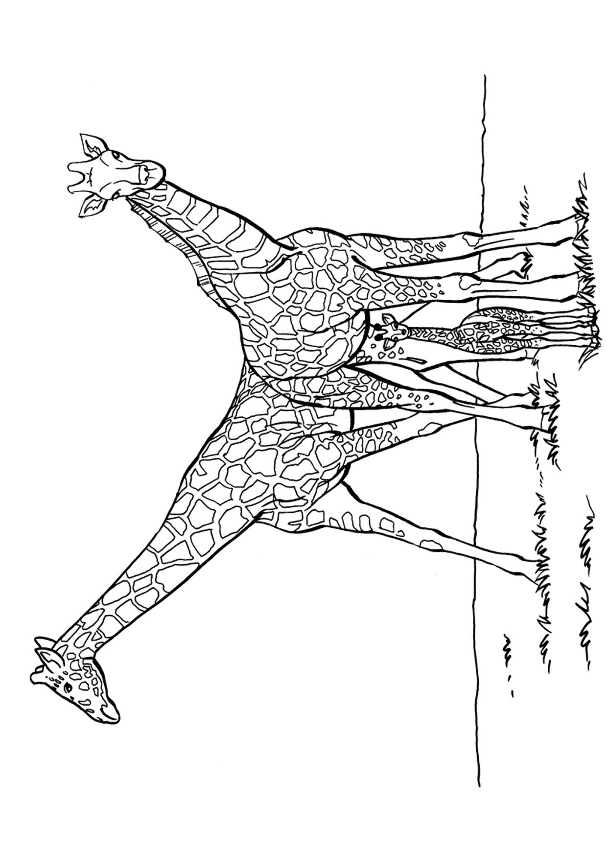 Disegno di giraffa 09