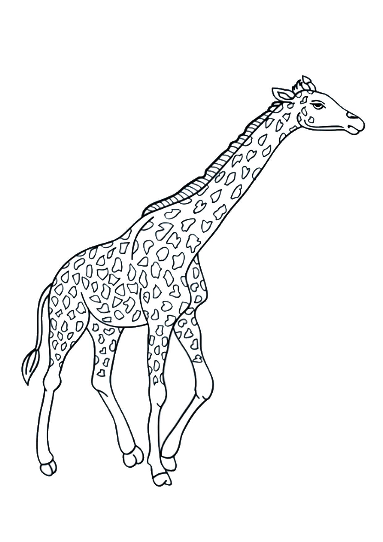 Disegno di giraffa 10