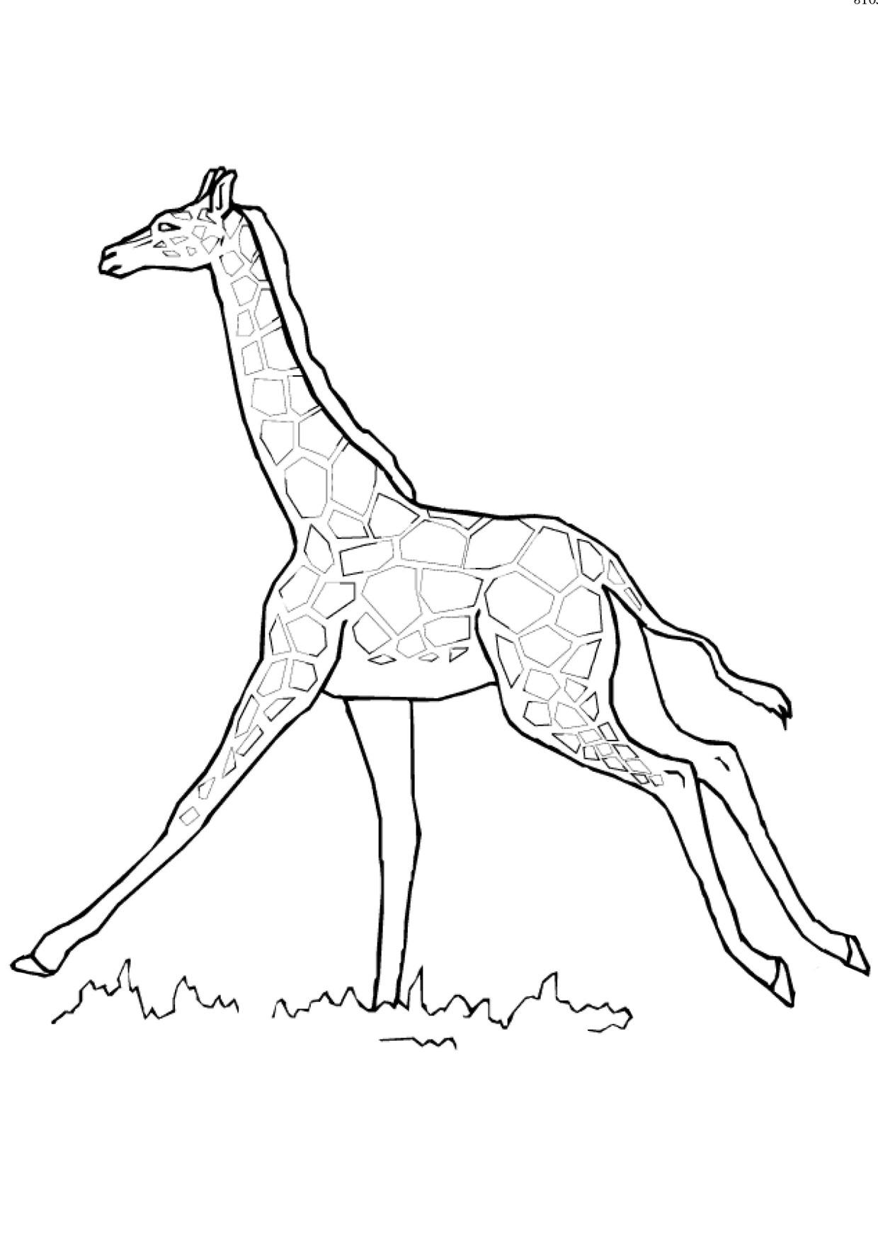 Disegno di giraffa 14