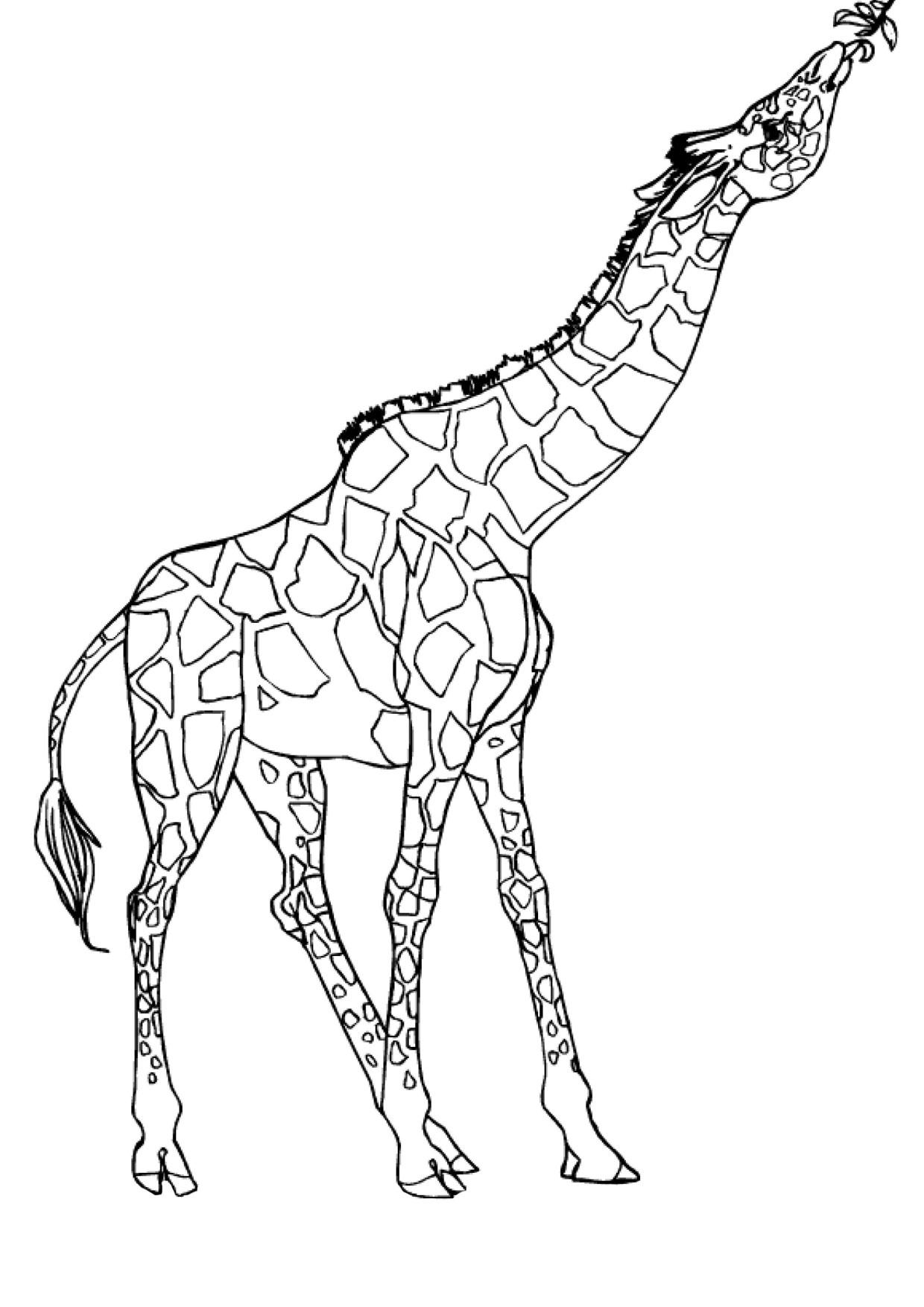 Disegno di giraffa 18