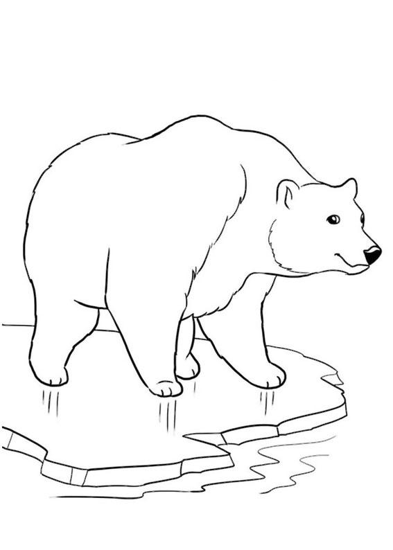 Disegno di Orso polare da colorare 1