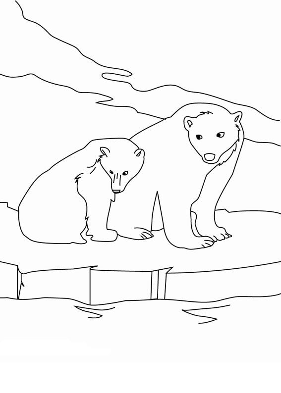 Disegno di Orso polare da colorare 2