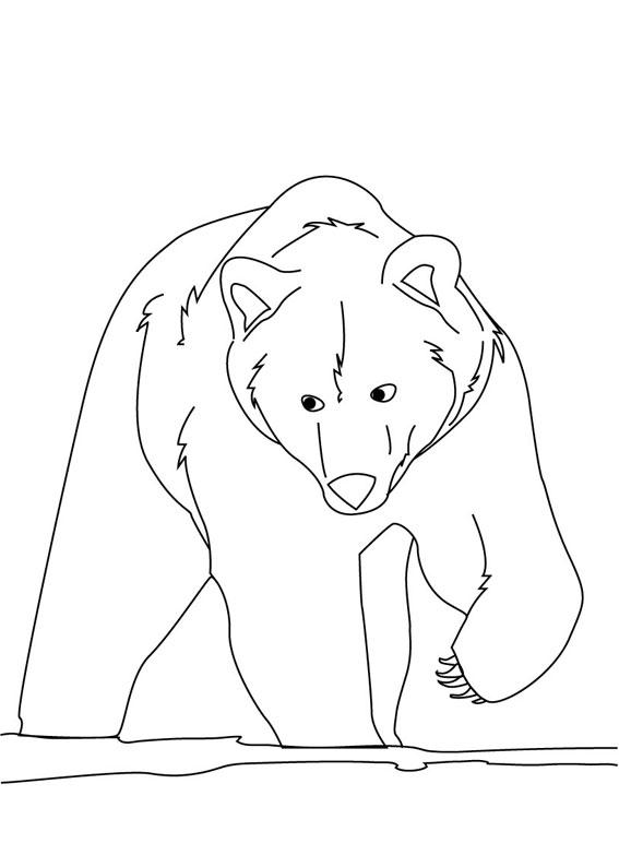 Disegno di Orso polare da colorare 3