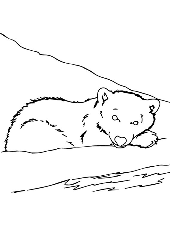 Disegno di Orso polare da colorare 4