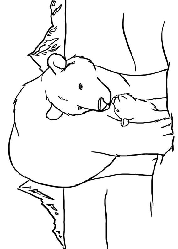 Disegno di Orso polare da colorare 5
