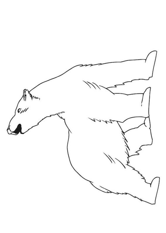 Disegno di Orso polare da colorare 6