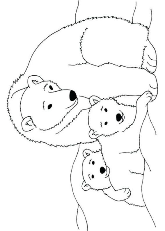 Disegno di Orso polare da colorare 7