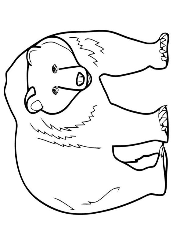 Disegno di Orso polare da colorare 8