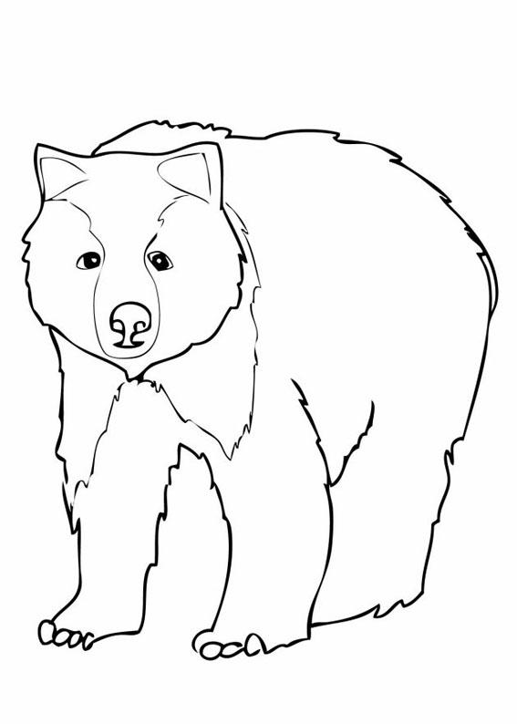 Disegno di Orso da colorare 01