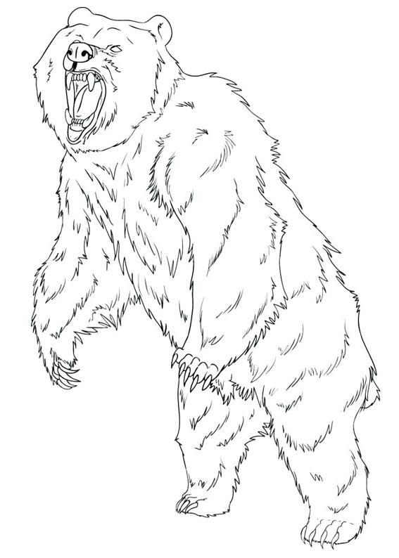 Disegno di Orso da colorare 06