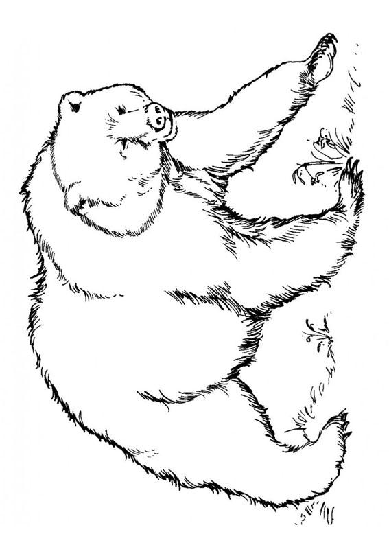 Disegno di Orso da colorare 07