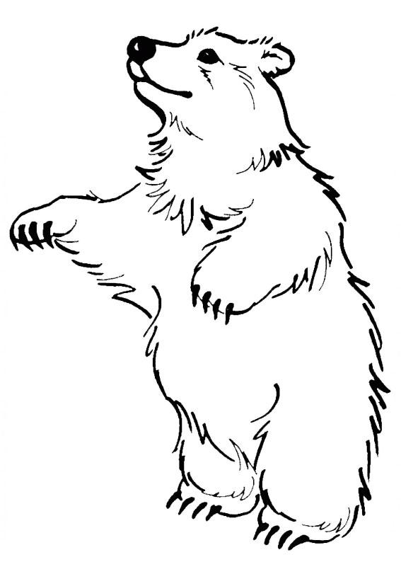 Disegno di Orso da colorare 08