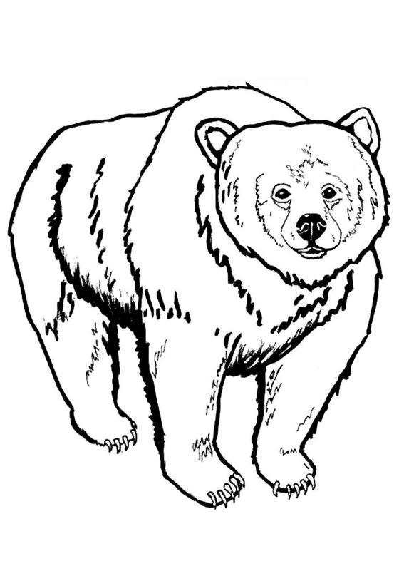 Disegno di Orso da colorare 09