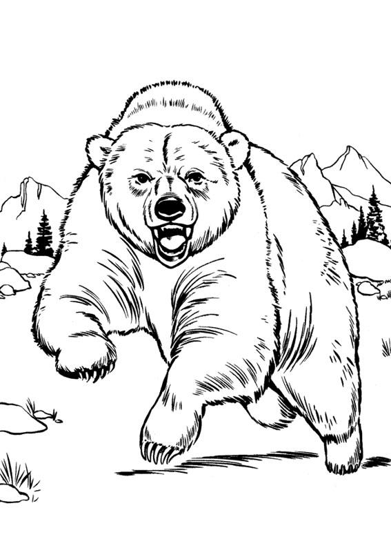 Disegno di Orso da colorare 10