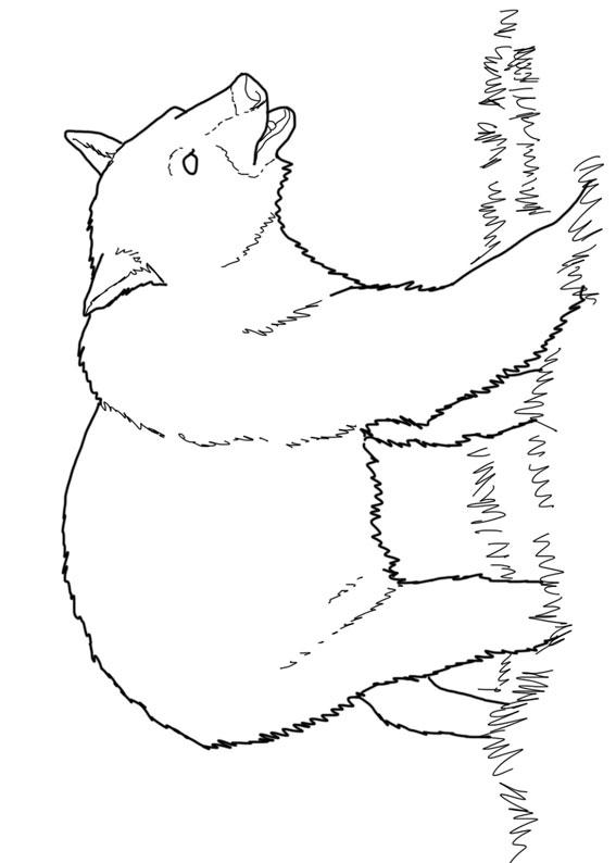 Disegno di Orso da colorare 11
