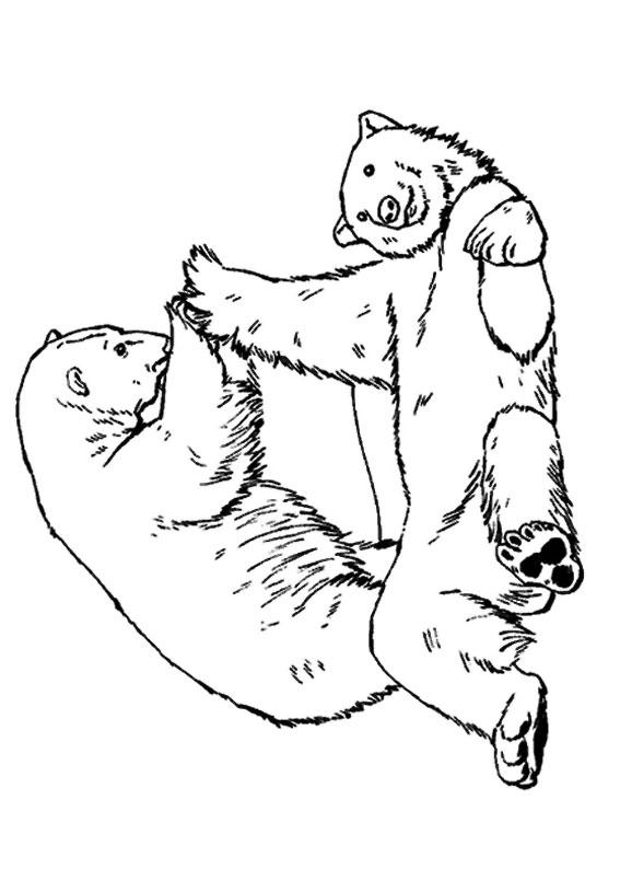 Disegno di Orso da colorare 12