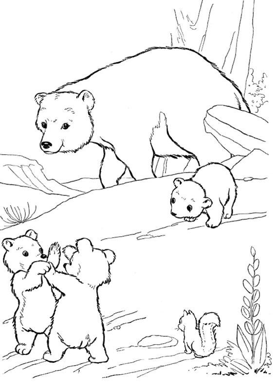 Disegno di Orso da colorare 13