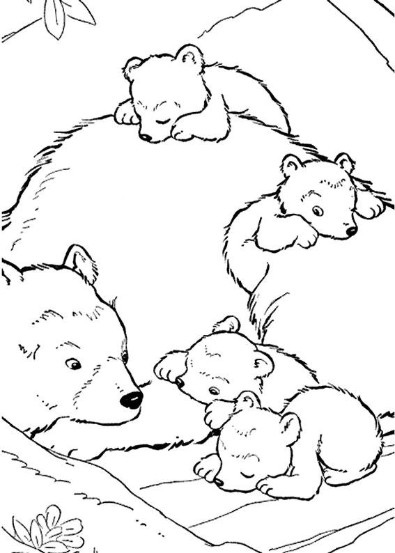 Disegno di Orso da colorare 14