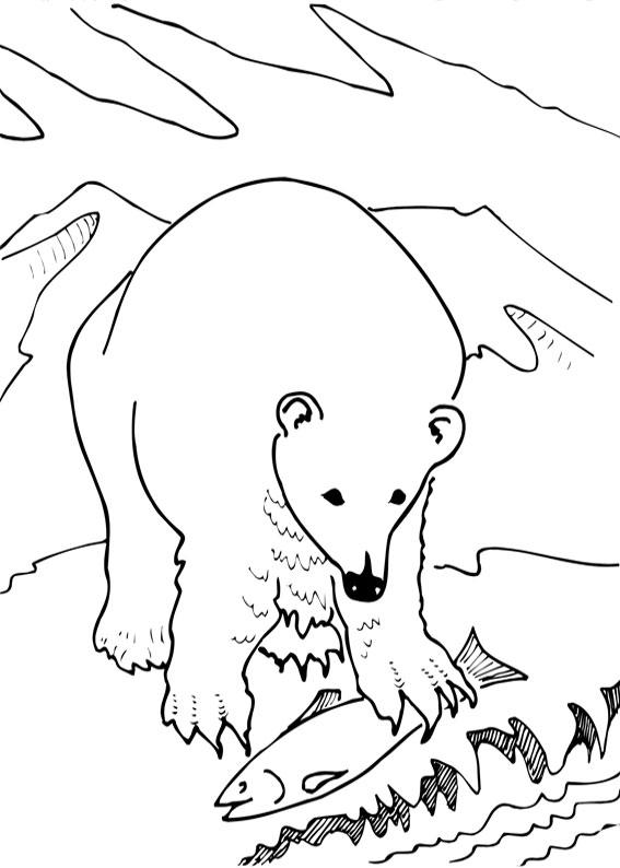 Disegno di Orso da colorare 15