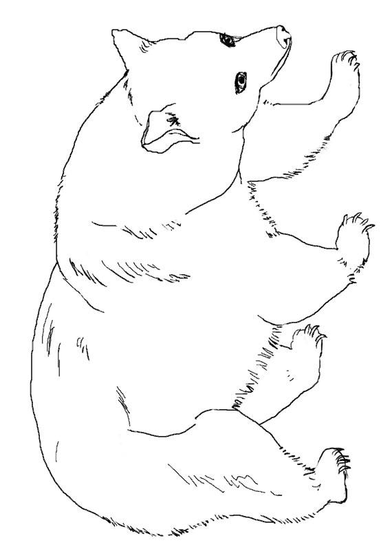 Disegno di Orso da colorare 16