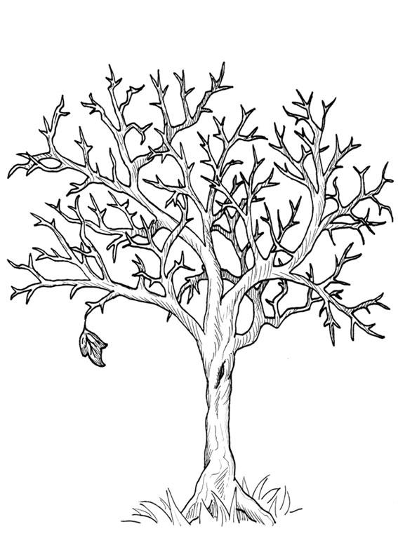 Disegno di albero autunnale da colorare 01