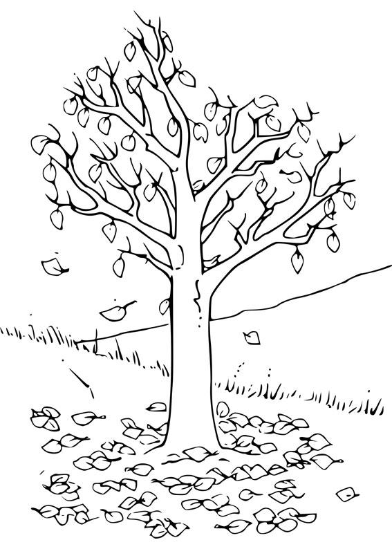 Disegno di albero autunnale da colorare 04