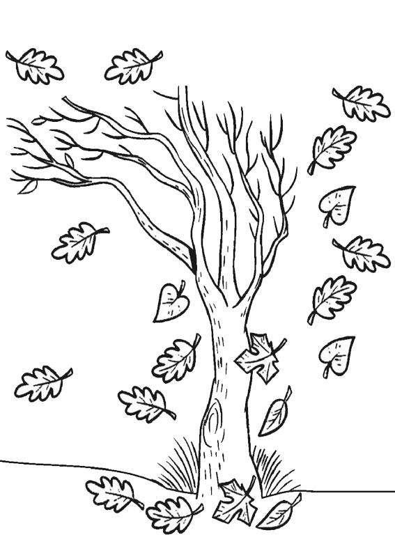 Disegno di albero autunnale da colorare 09