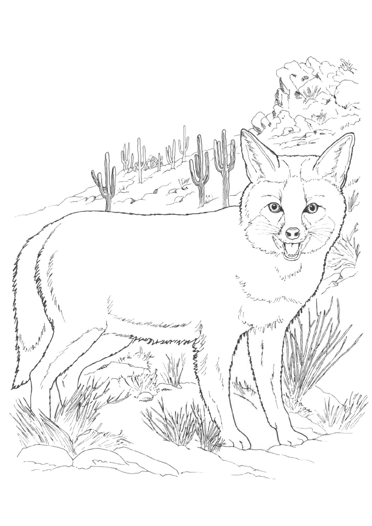 Disegno di volpe da colorare 03