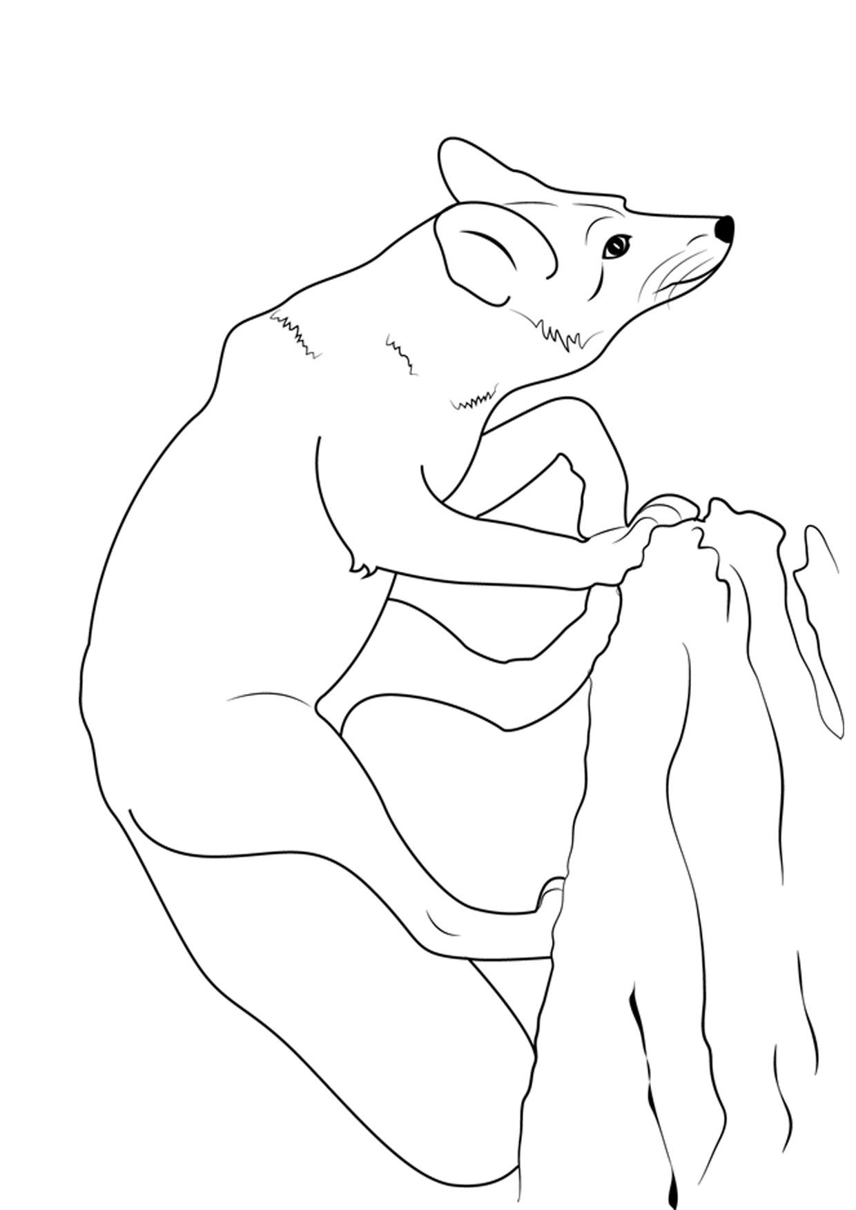 Disegno di volpe da colorare 12