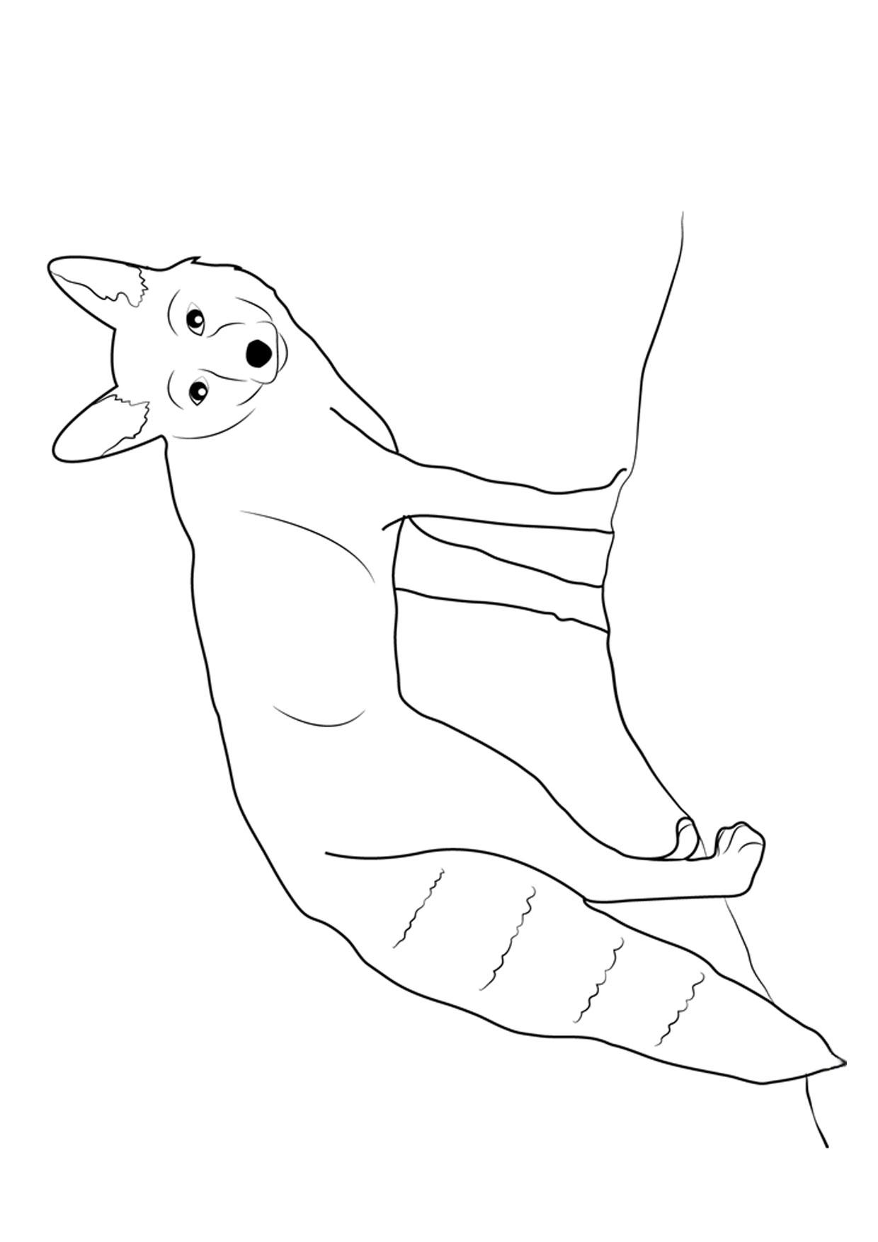 Disegno di volpe da colorare 19