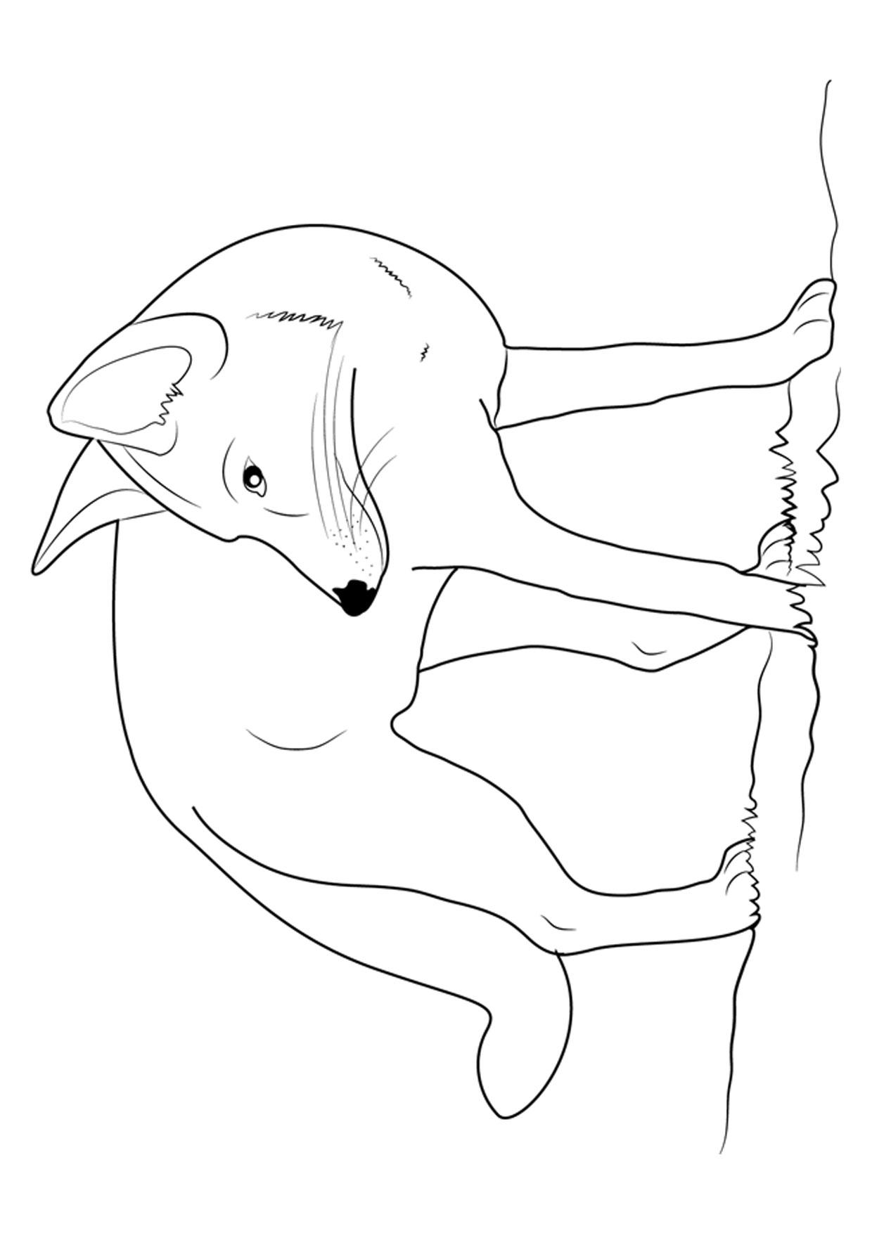 Disegno di volpe da colorare 21
