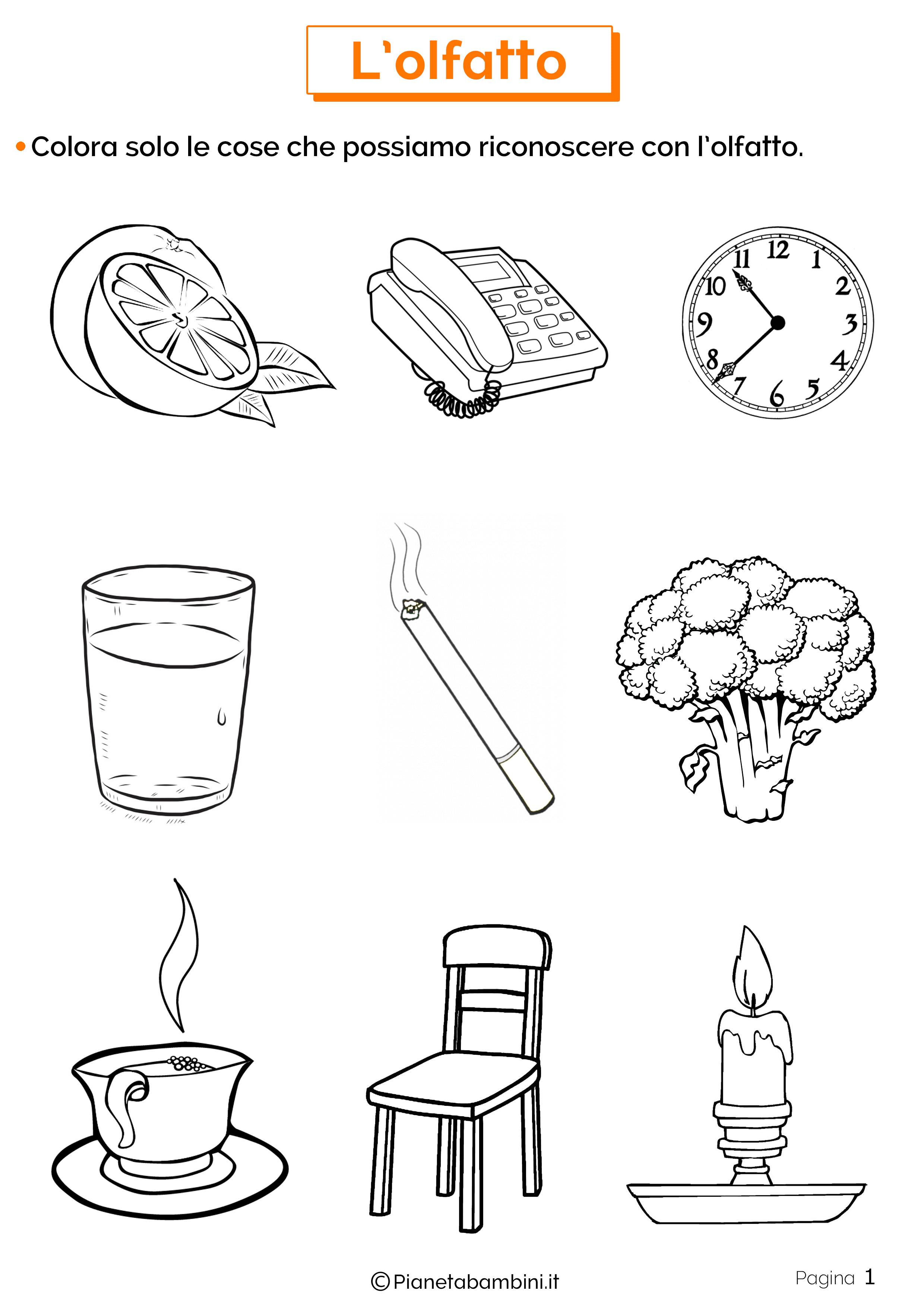 Esercizi sull'olfatto 1