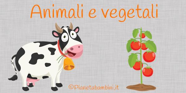 Esercizi su animali e vegetali per la scuola primaria