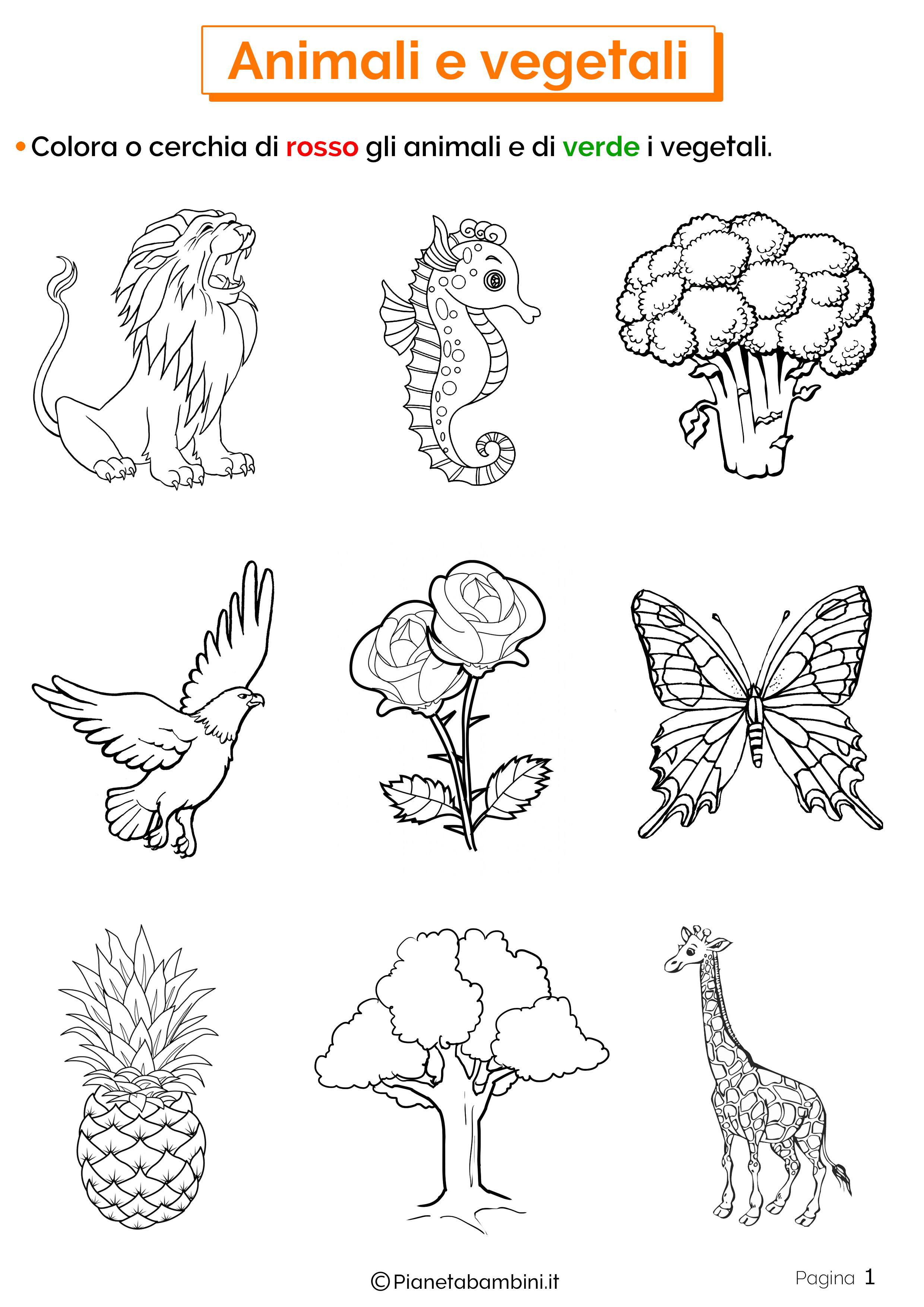 Esercizi su animali e vegetali 1