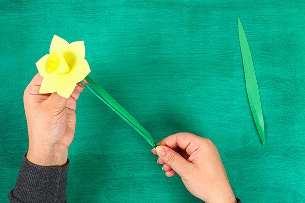 Come inserire lo stelo ai fiori di narciso