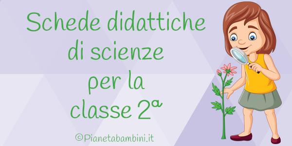 Schede didattiche di scienze per la seconda classe della scuola primaria
