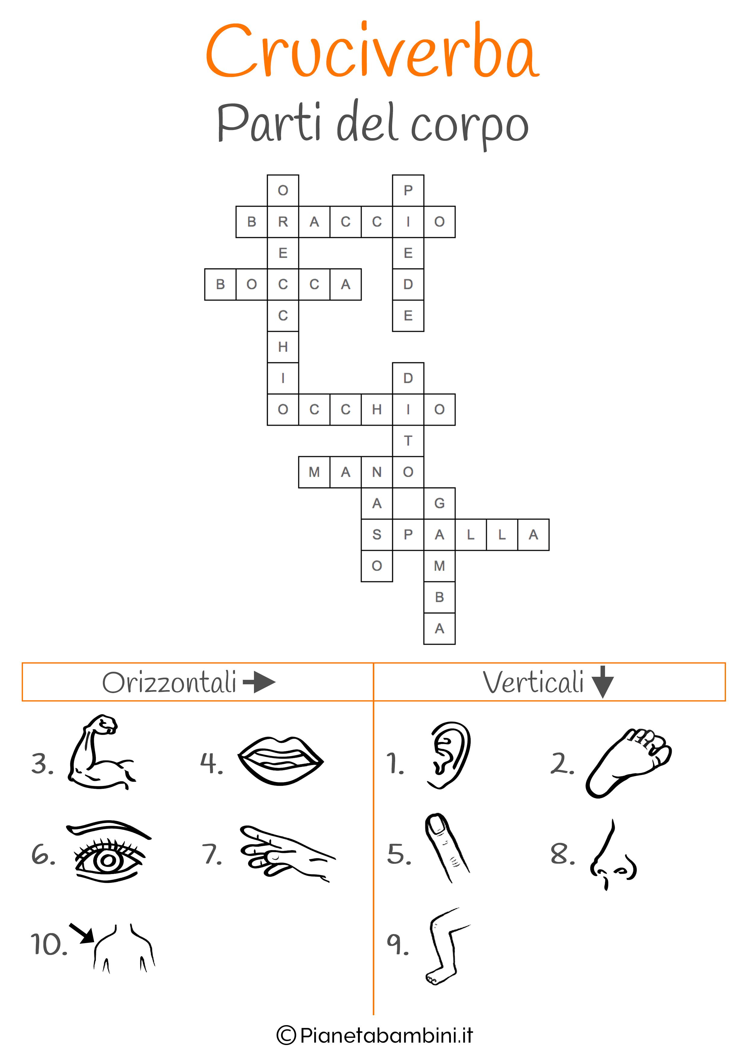 Soluzione cruciverba illustrato sulle parti del corpo