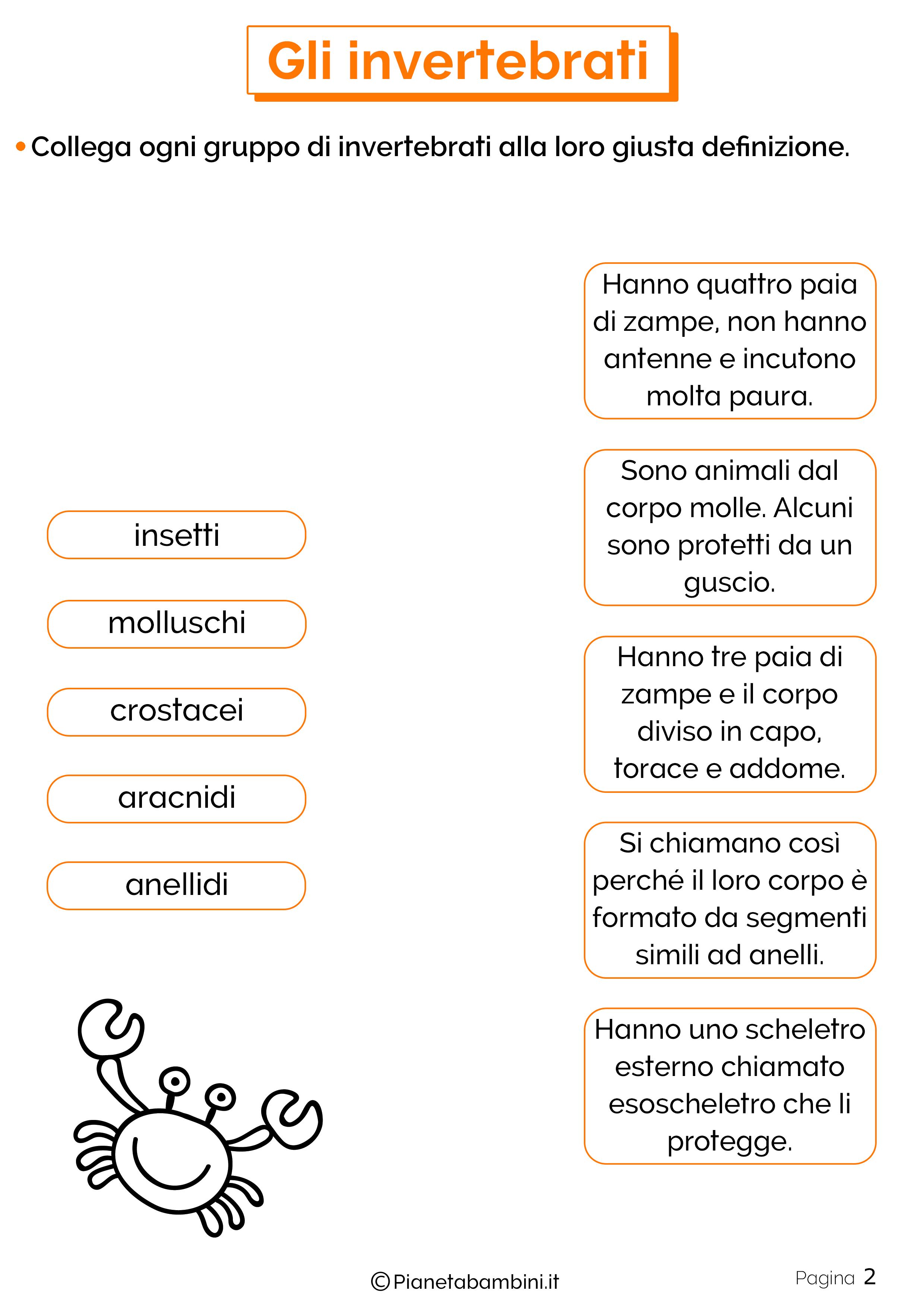 Esercizi sugli animali invertebrati 2