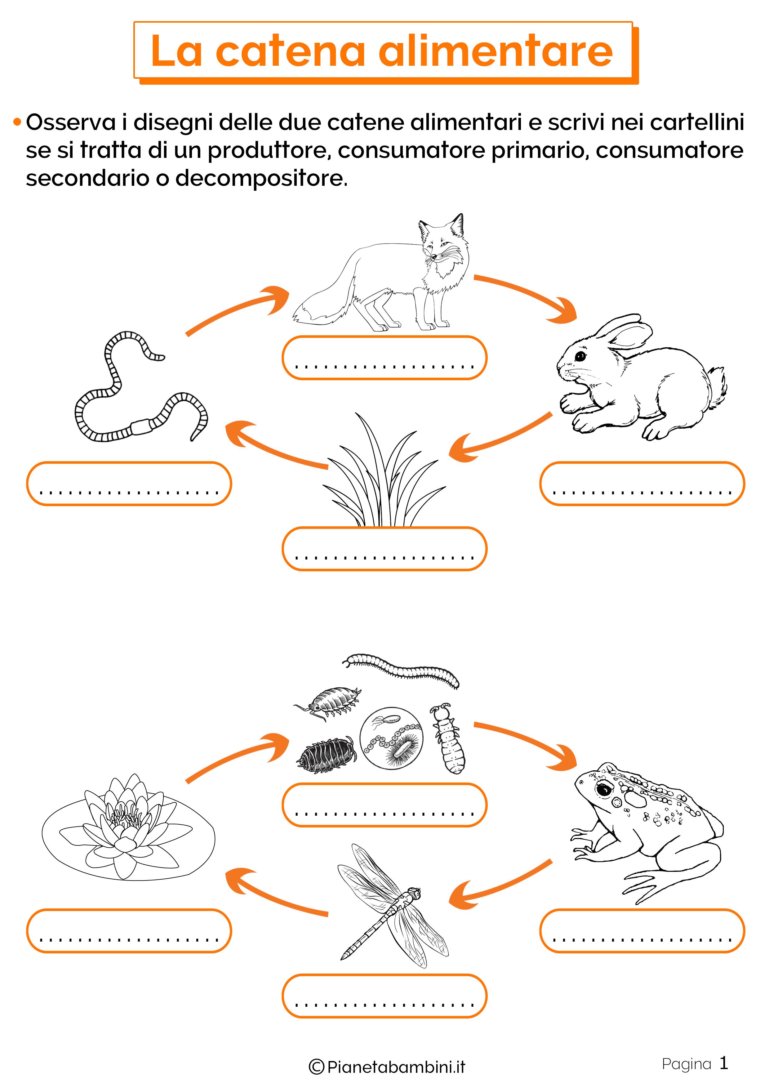 Esercizi sulla catena alimentare 1