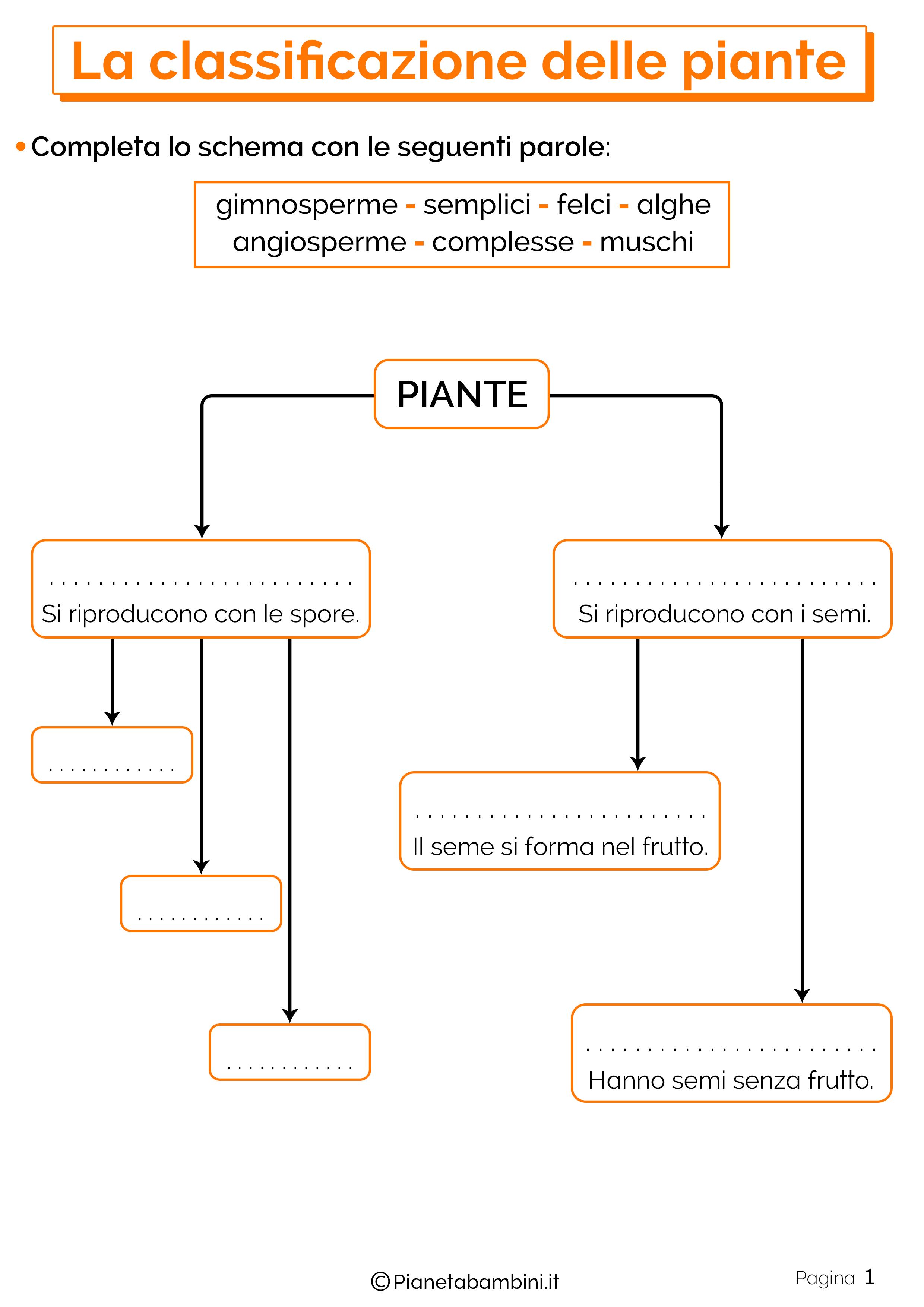 Esercizi sulla classificazione delle piante 1