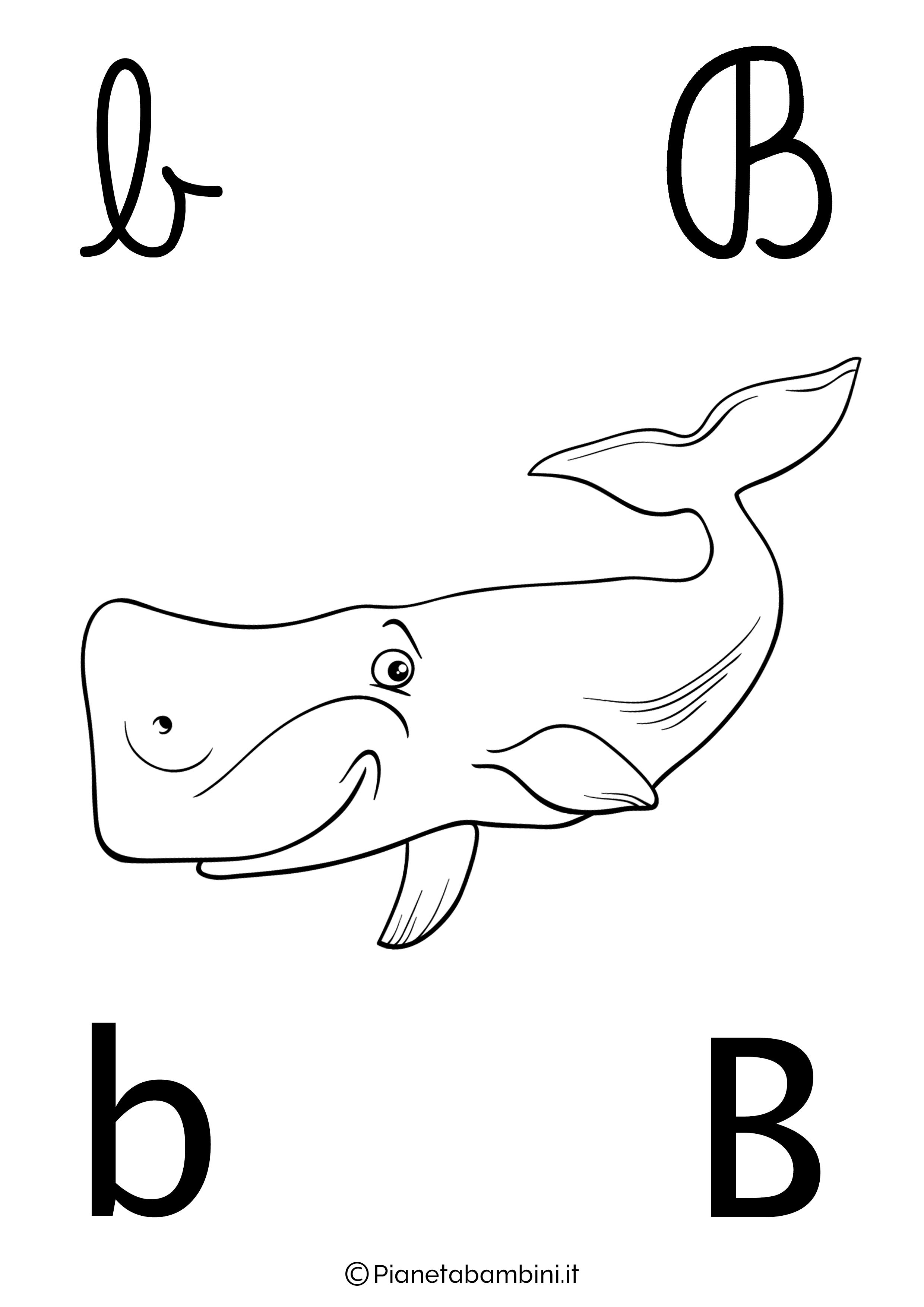 Alfabetiere lettera B da colorare